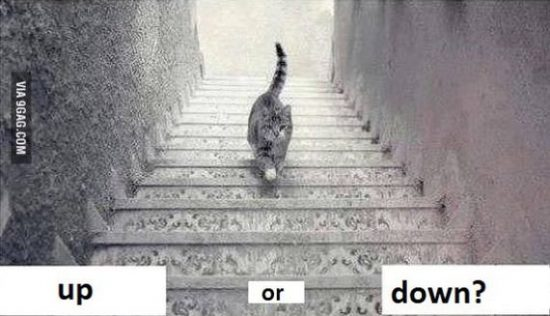 Is the cat going up or down the stairs?