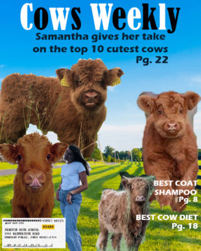 Cows Weekly Magazine Cover